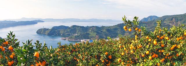 みかん・柑橘 / リアス式海岸とみかん