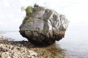小僧都の丸石