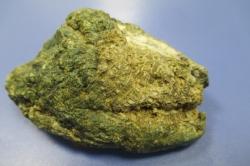 ハチノスサンゴの化石