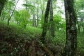 K1 ブナの原生林