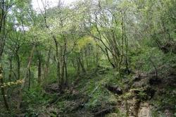 三滝渓谷の斜面林