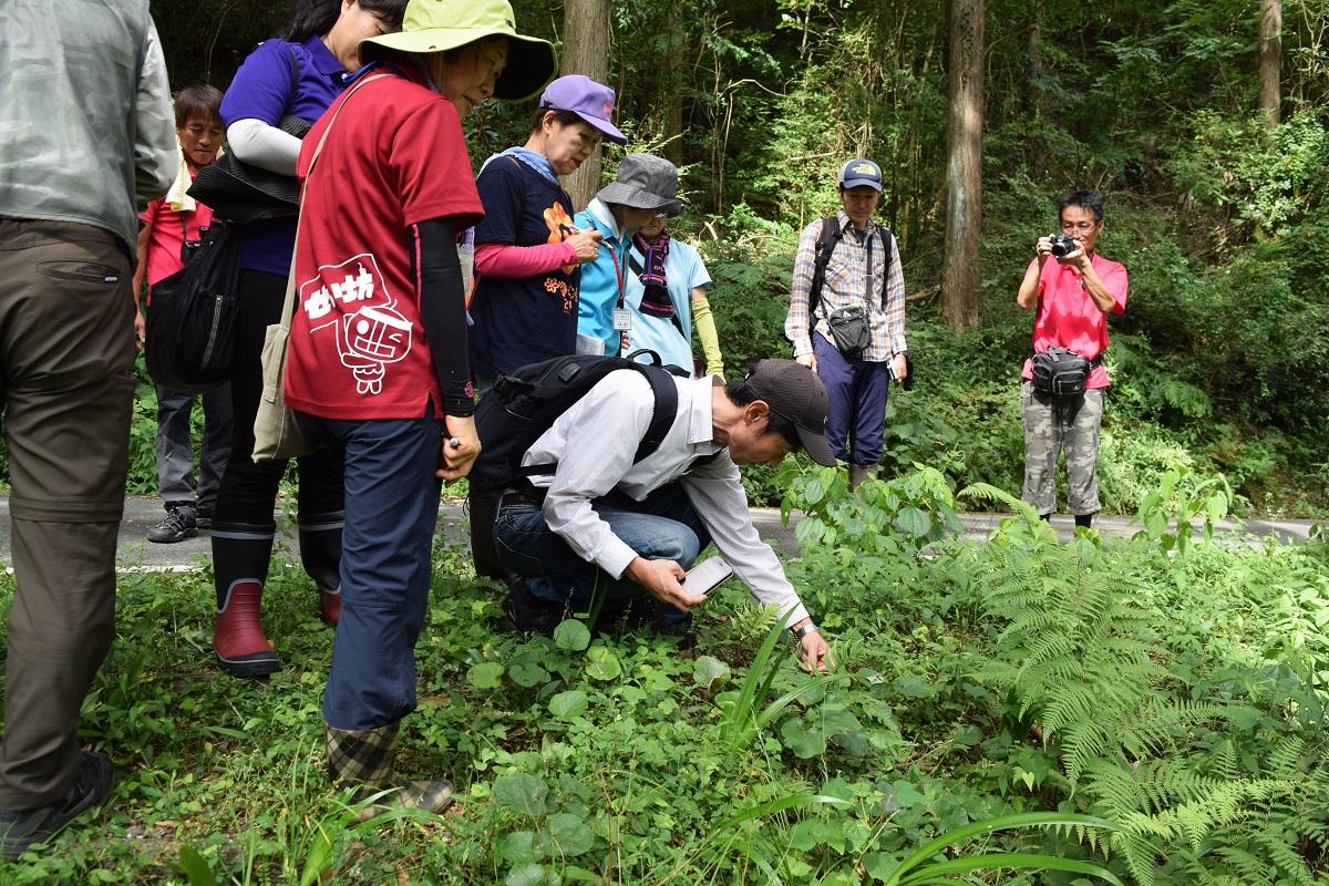桂川渓谷でシダ植物調査が行われ...