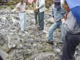 08s鳥巣石灰岩