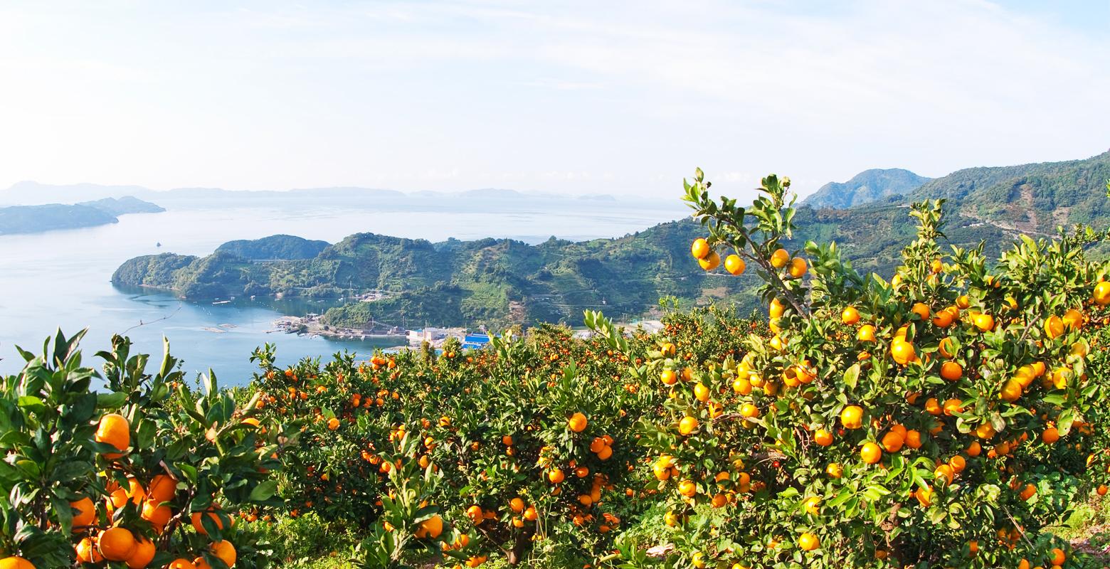 Oranges / Rias coast and oranges