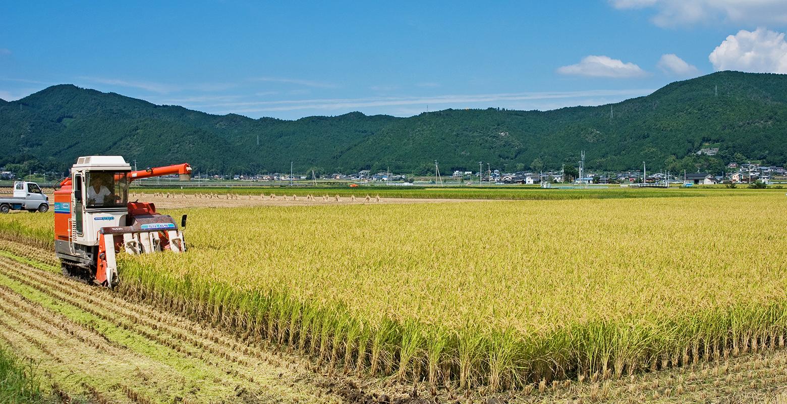 Rice / Uwa basin